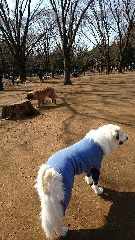 代々木公園ドックラン